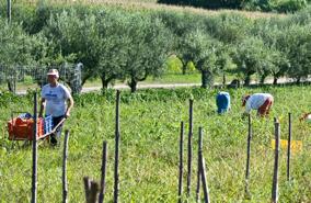 フランチェスコ・ヴァストラ農園風景